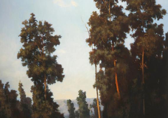 Bryan Road Trees